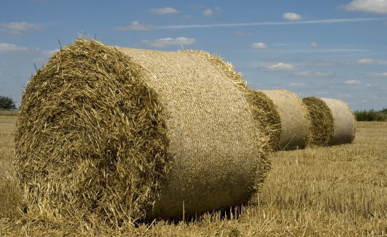 Diventare Imprenditore Agricolo Professionale