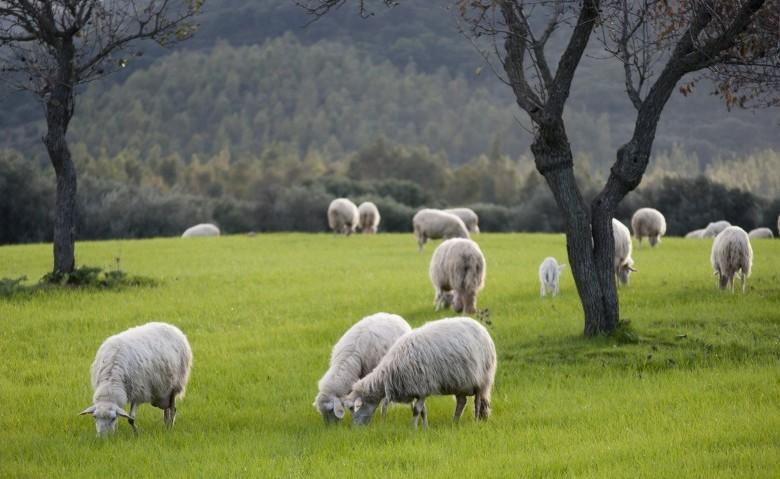 Azienda agricola - allevamento ovini