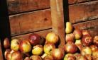 Diritto al cibo - Coldiretti contro la fame nel mondo