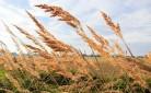Giovani agricoltori - nuove terre per aziende multifunzionali