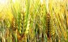 Politica agricola comune - il convegno a Modena