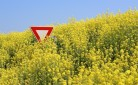 Anche la Francia dice no a prodotti Ogm e biotech
