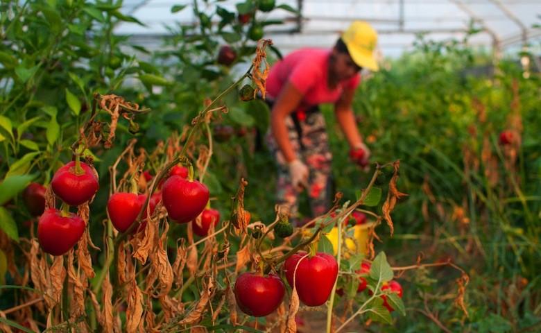 Agricoltore Coldiretti al lavoro
