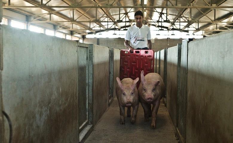 Agricoltura: situazione prezzi in campagna, sta assumendo toni drammatici anche per gli allevamenti