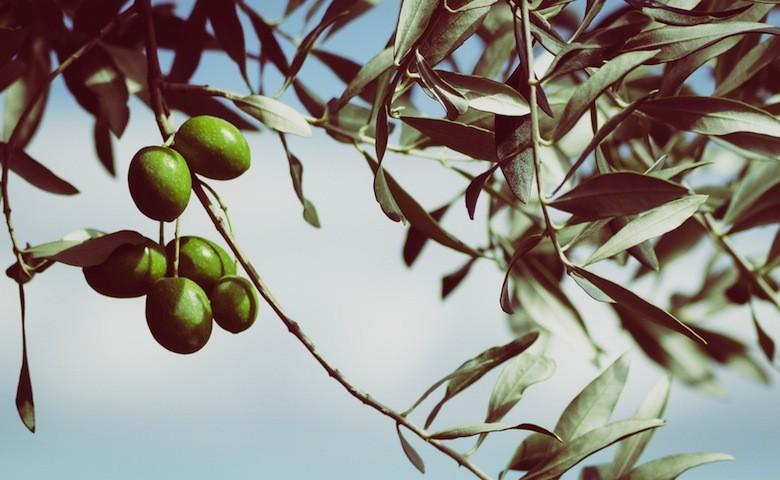 Olio d'oliva più sicuro se acquistato direttamente in azienda