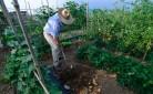Contadino che coltiva la propria terra