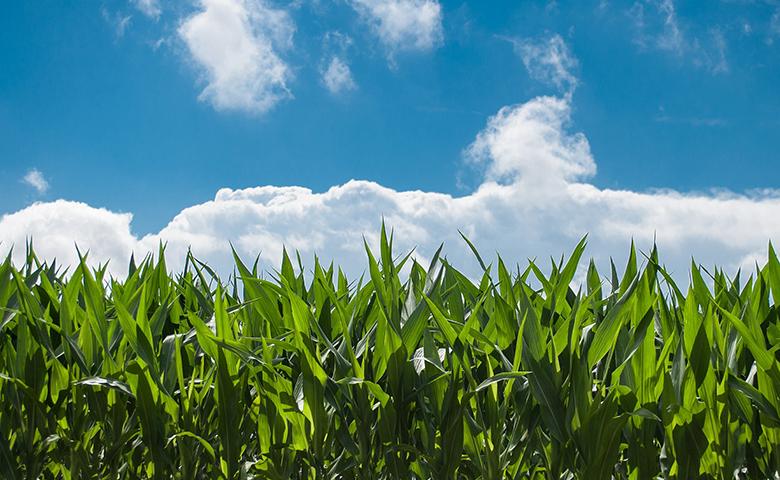 Flop ogm con -18% di semine in UE