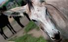 In Italia, sono 7 le razze di asini salvate dall'estinzione