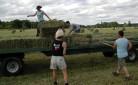 Imprese: tanti i giovani scelgono l'agricoltura come professione