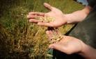 Agricoltore che sfrutta i vantaggi del pacchetto giovani