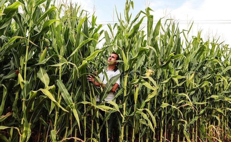 Occupazione in agricoltura, giovane imprenditore agricolo nella sua azienda
