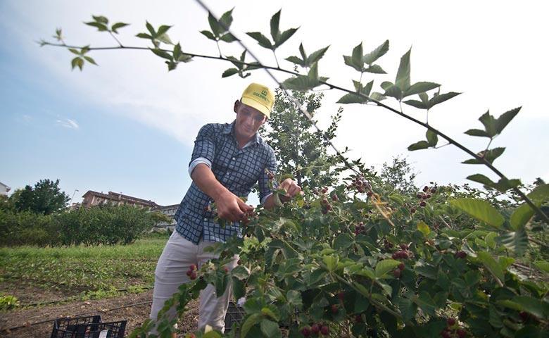 Agricoltore al lavoro nel Mezzogiorno dove agricoltura e occupazione crescono insieme