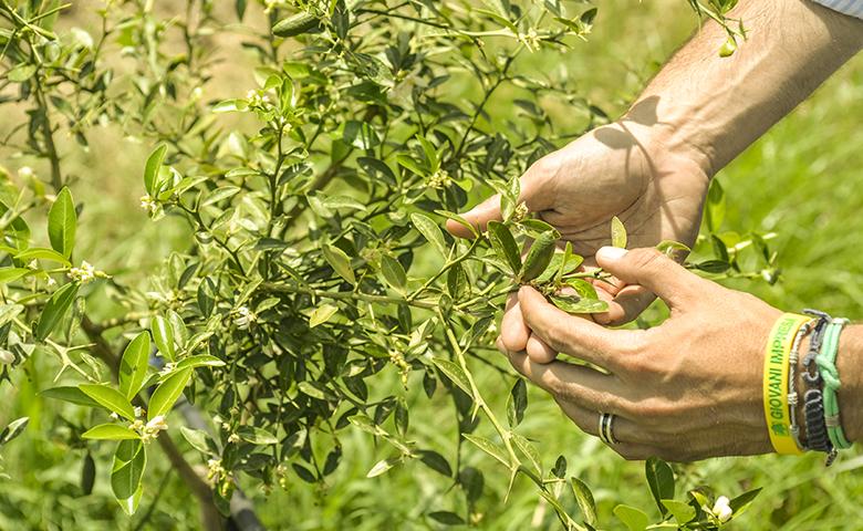 Agricoltura e giovani: imprenditore agricolo con le piante della propria azienda