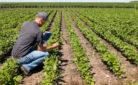 Contributi alle assicurazioni delle produzioni agricole