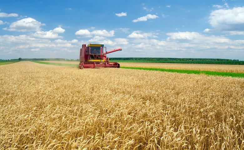 Made in Italy, campo di grano