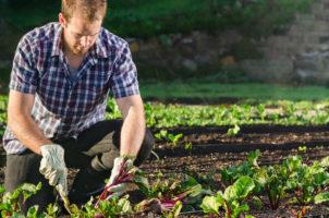 Bando PSR Liguria per giovani agricoltori