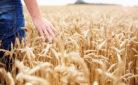 Giovane imprenditore nel suo campo di grano