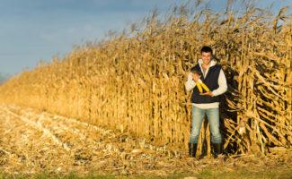Giovane imprenditore agricolo al lavoro