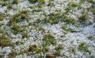 Grandine e gelo a causa del maltempo