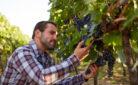 Giovane viticoltore al lavoro nella propria vigna