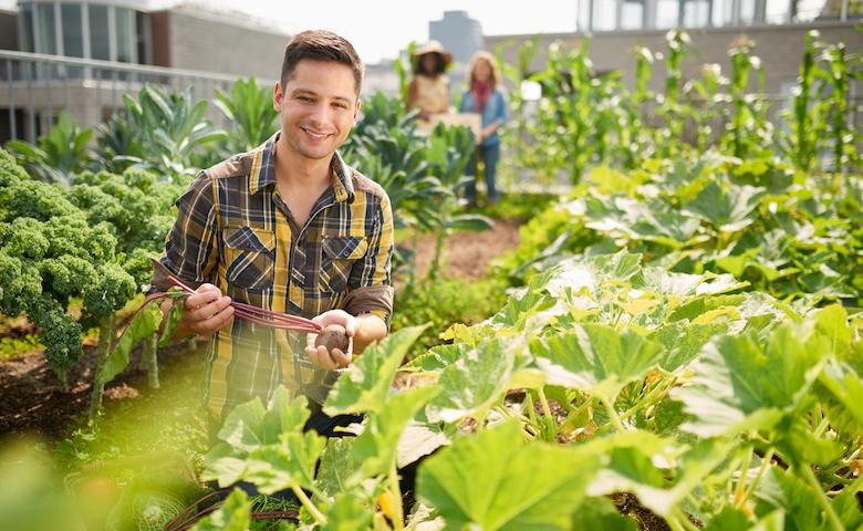Bando per giovani agricoltori regione FVG