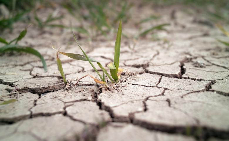 Siccità in un campo causato dal clima anomalo