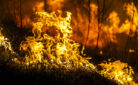 Incendio in un bosco