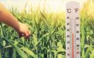 Agricoltura e clima: temperature alte nei campi coltivati