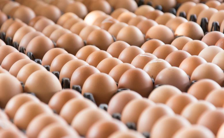 Uova pronte per la grande distribuzione
