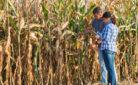 Agricoltura: giovani imprenditori al lavoro