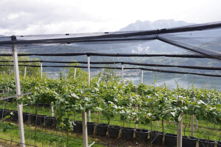 Impianti alberi da frutto