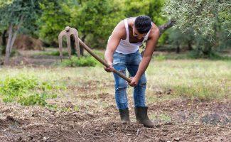 Agricoltura traina l'occupazione