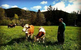 Azienda Brignè, il latte di altissima qualità